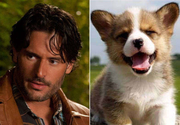 Cutie and the Beast: True Blood's Alcide Herveaux vs. A Puppy Taking on Strange Threats