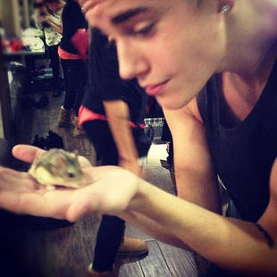 Justin Bieber Accused of Animal Cruelty After Gifting Fan a Pet Hamster (VIDEO)