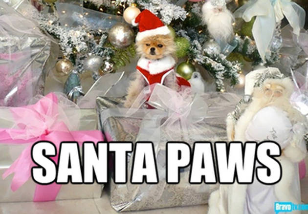 Have A Very Giggy Christmas! Lisa Vanderpump's Pup Suits Up Santa-Style (PHOTO)