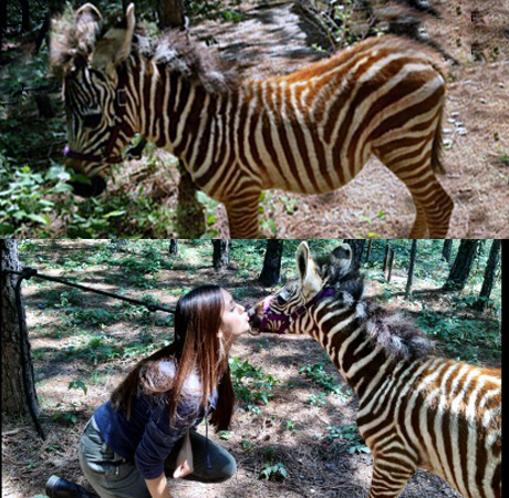 Three Perfectly Plausible Reasons Why There's a Zebra on The Vampire Diaries Season 4 Set