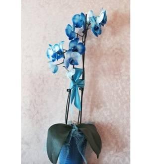 Who's Sending Adrienne Maloof Flowers? (PHOTO)