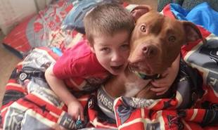 4-Year-Old-Suffering Life Threatening Blood-Sugar Crash Saved by Heroic Pit Bull