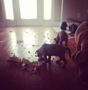 Ian Somerhalder Is Under Attack From a Brood of Adorable Puppies (PHOTO)
