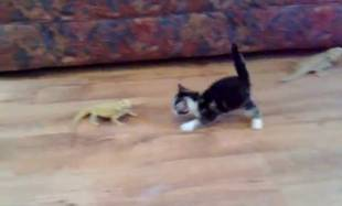 "Kitten vs. Lizards: Giving New Meaning to the Term ""Scaredy Cat"" (VIDEO)"