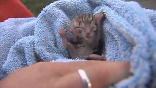 Two-Faced Kitten Born in Oregon: See This Amazing Cat! (VIDEO)