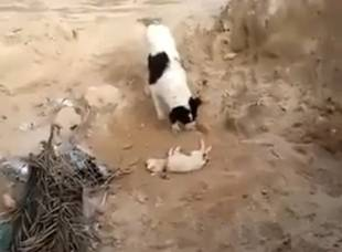 Dog Buries Puppy in This Incredibly Touching Video