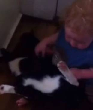 Baby Wrestles With Incredibly Patient Cat (VIDEO)