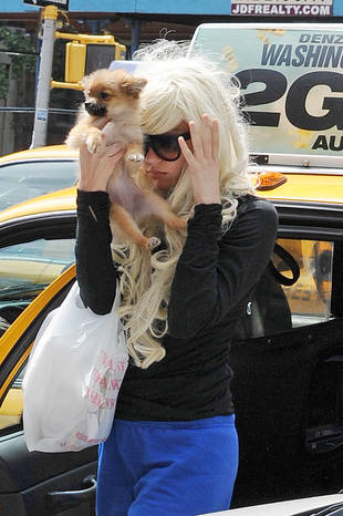 Amanda Bynes Soaked Her Dog in Gasoline While Starting Fire (VIDEO)