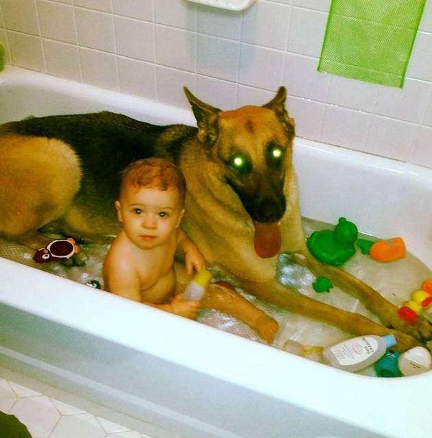 Laser-Eyed Dog Is the World's Best Bathtub Lifeguard (PHOTO)