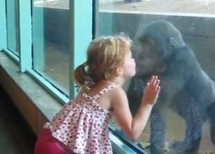 Little Girl and Baby Gorilla Are Adorable BFFs (VIDEO)