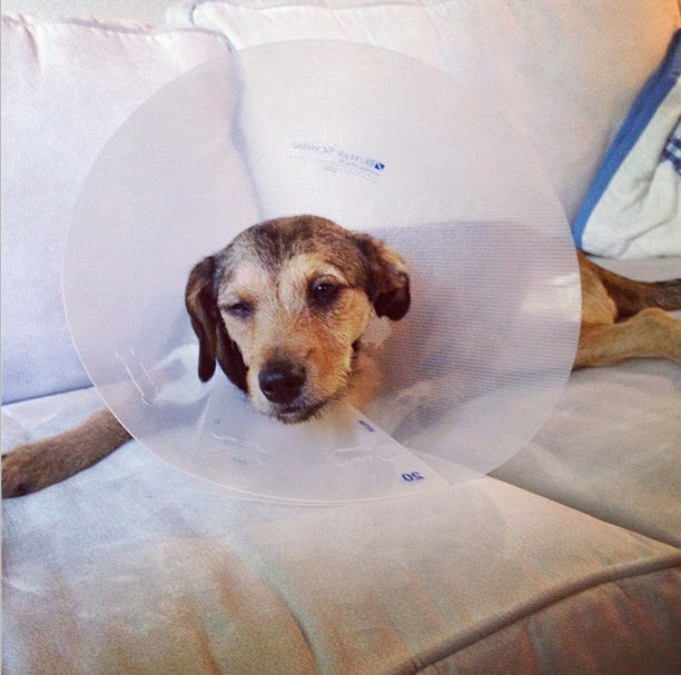 Ali Fedotowsky's Puppy Undergoes Surgery! Is He OK?