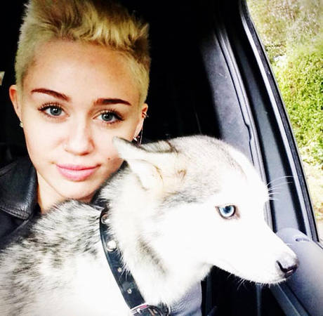 "Miley Cyrus's Dog Floyd Dies: ""I Wish He Would've Taken Me With Him"" (VIDEO)"
