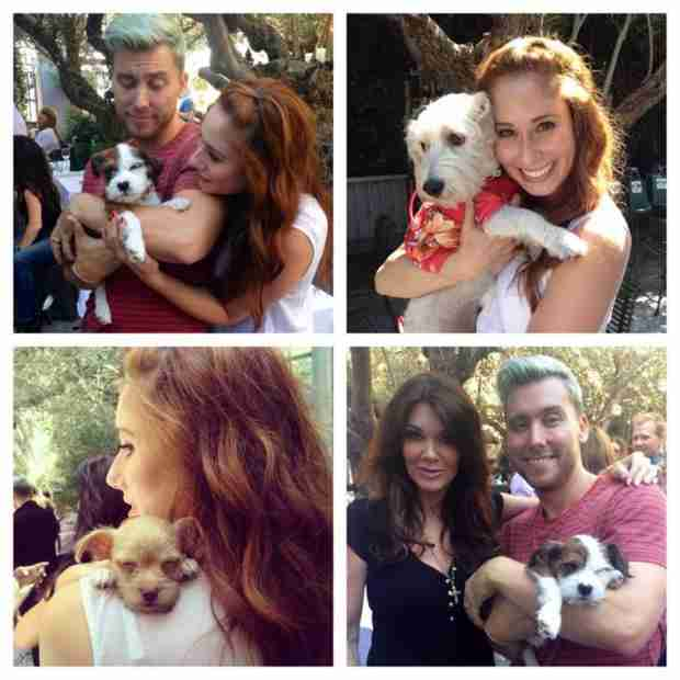 Lisa Vanderpump and Lance Bass Host Dog Adoption Event (PHOTO)